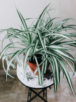 Fascinating Indoor Plants Design Ideas With Desert Atmosphere To Have13