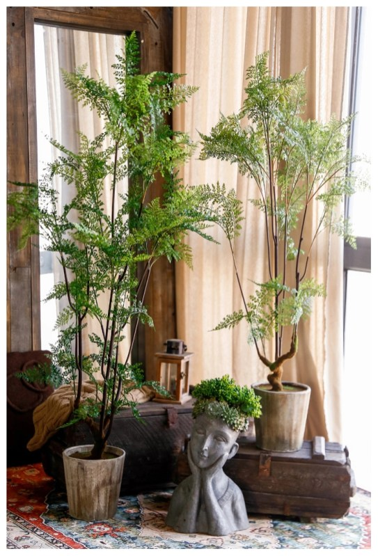 Fascinating Indoor Plants Design Ideas With Desert Atmosphere To Have19