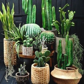 Fascinating Indoor Plants Design Ideas With Desert Atmosphere To Have24