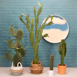 Fascinating Indoor Plants Design Ideas With Desert Atmosphere To Have29