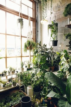 Lovely Indoor Jungle Decor Ideas To Try Asap08