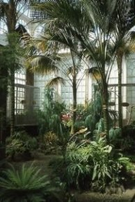 Lovely Indoor Jungle Decor Ideas To Try Asap14