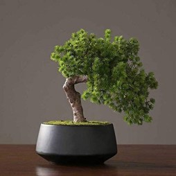 Fascinating Bonsai Tree Design Ideas For Your Room03
