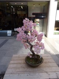 Fascinating Bonsai Tree Design Ideas For Your Room05