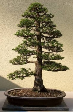 Fascinating Bonsai Tree Design Ideas For Your Room06