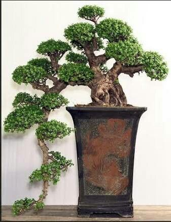 Fascinating Bonsai Tree Design Ideas For Your Room09