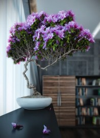 Fascinating Bonsai Tree Design Ideas For Your Room10