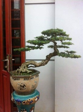 Fascinating Bonsai Tree Design Ideas For Your Room18