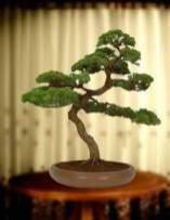 Fascinating Bonsai Tree Design Ideas For Your Room19