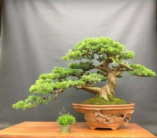 Fascinating Bonsai Tree Design Ideas For Your Room21