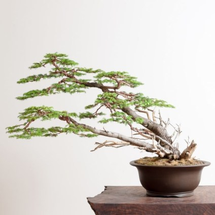 Fascinating Bonsai Tree Design Ideas For Your Room25