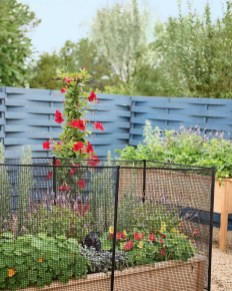 Enchanting Living Fences Design Ideas That Suitable For Your Yard 10