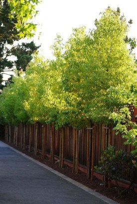Enchanting Living Fences Design Ideas That Suitable For Your Yard 17