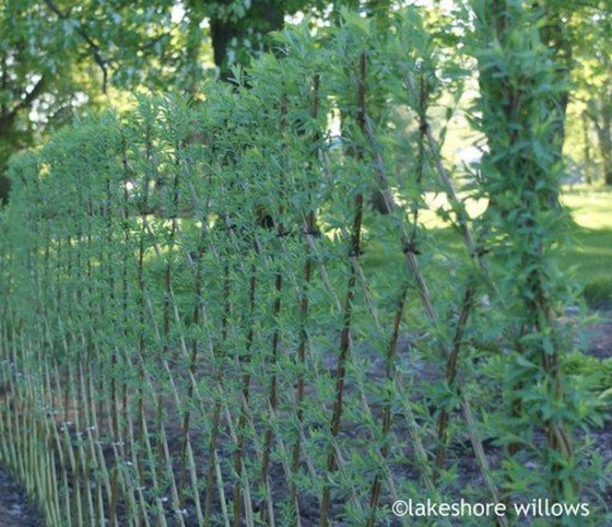 Enchanting Living Fences Design Ideas That Suitable For Your Yard 48