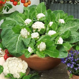 Wonderful Veggies And Fruits Potted Design Ideas For Your Garden 07