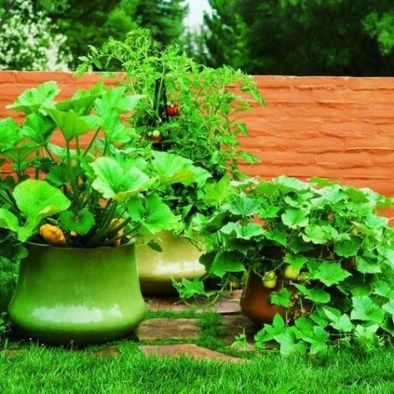 Wonderful Veggies And Fruits Potted Design Ideas For Your Garden 11