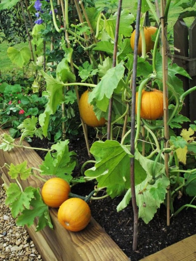 Wonderful Veggies And Fruits Potted Design Ideas For Your Garden 27