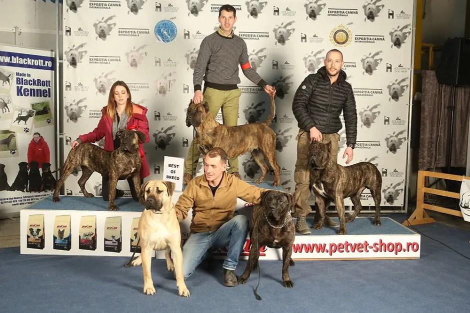 Napoca Dog Show
