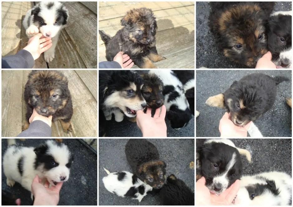 Campanie inedită de 8 Martie la Cluj: oferă emoție adoptă un căţel!