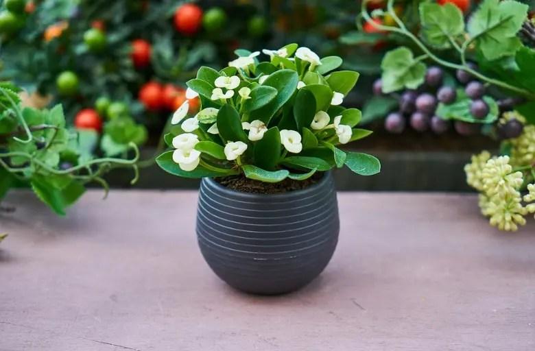 5 metode de a expune florile în casa ta