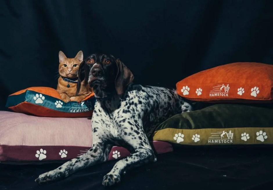 A fost lansat Hamstock - un nou magazin online pentru câini şi pisici