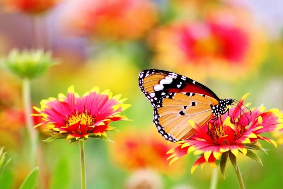 Ce spun florile despre personalitatea ta?