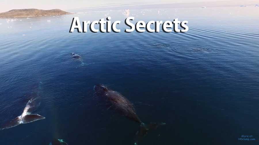 Arctic Secrets – Wild Seas – Ninginganiq