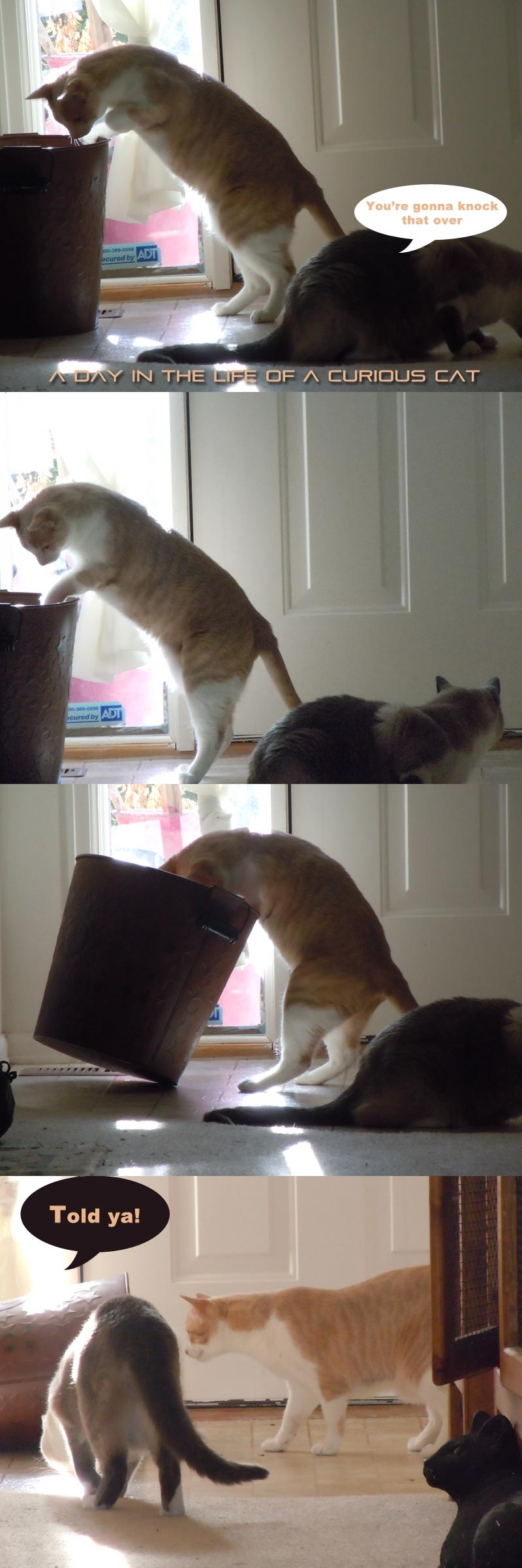 A day in the life of two clumsy curious cats caper