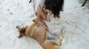 Beach Dog Number 8575