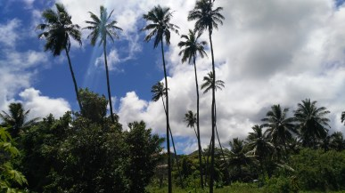 """None may build higher than a coconut tree"" is an actual law of Rarotonga"