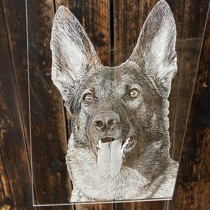 Fotogravyr hund