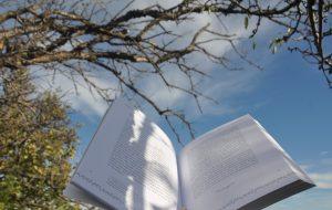 l-arbre-guerisseur