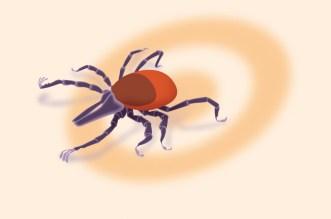 Rencontre quelqu'un avec la maladie de Lyme