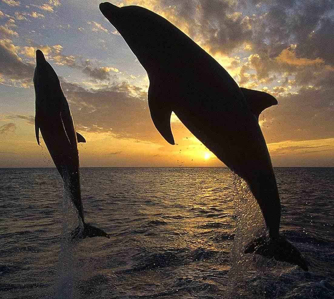sol-delfin