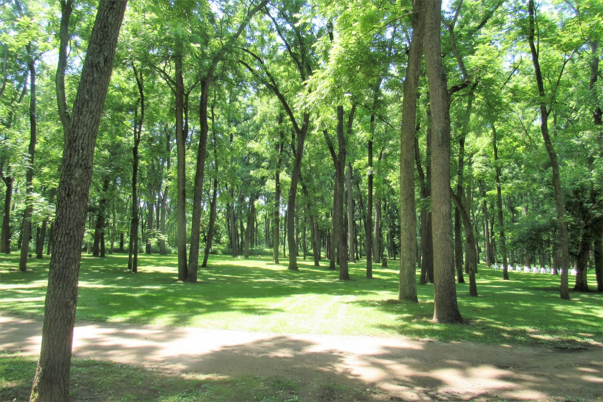 Rows of Black Walnut shade the grounds