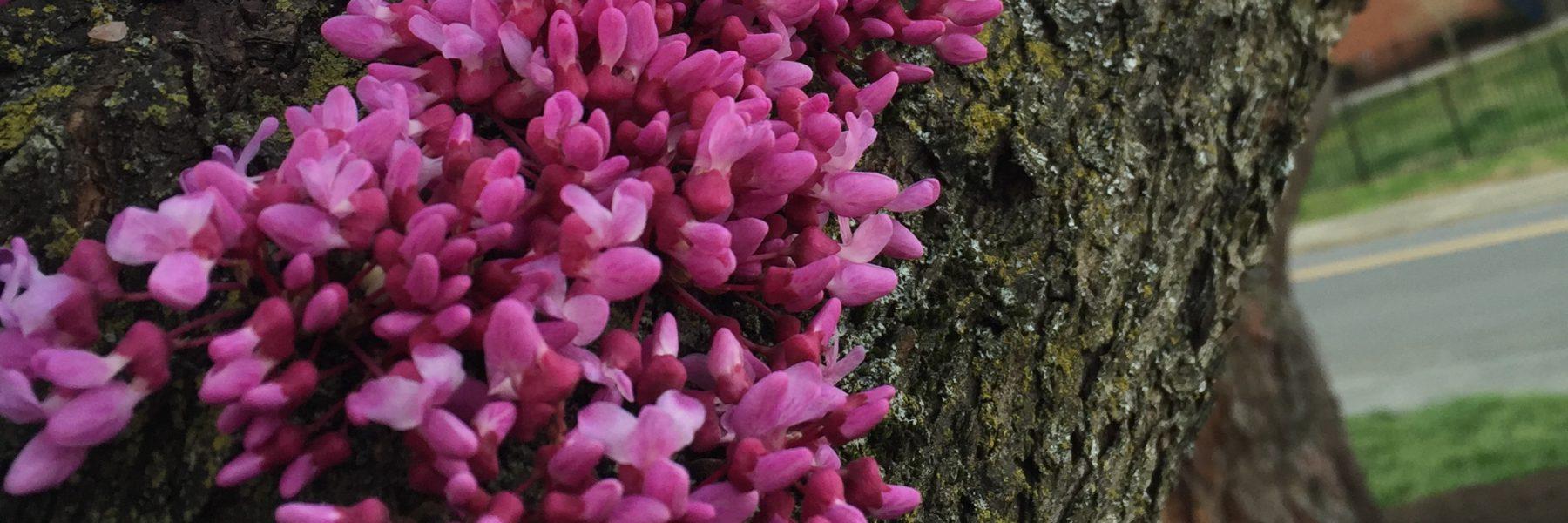 Flowers on a tree bark