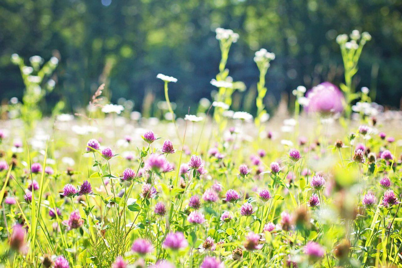 Wildflowers on field
