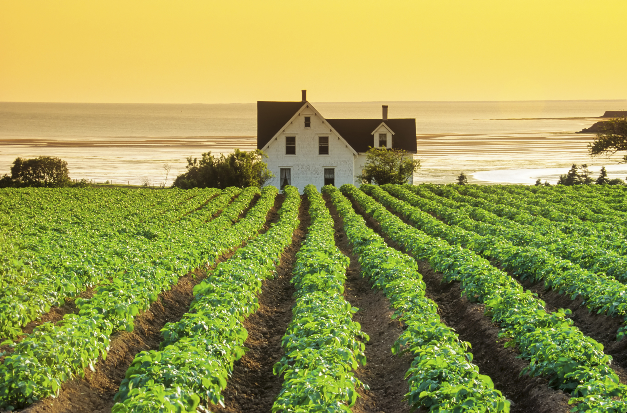 Farm Country Decorating Ideas