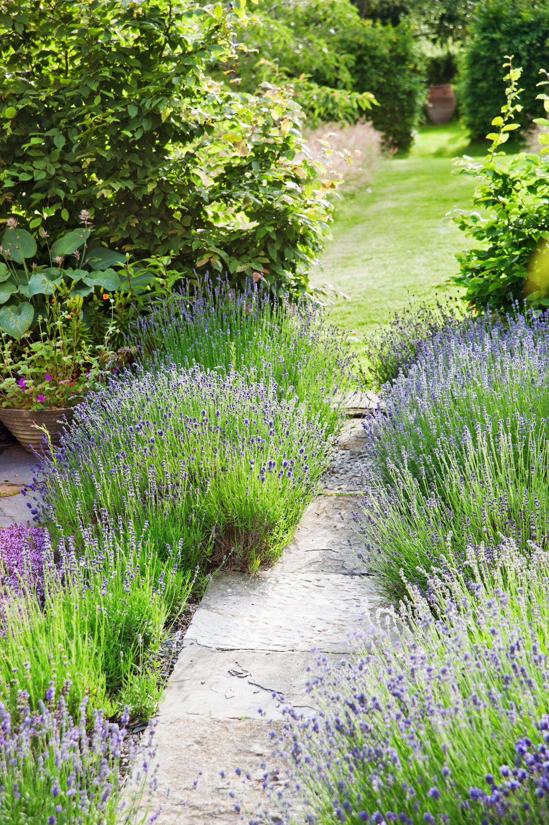 13 Easy Garden Plants To Grow - Cheap Hardy Plant Ideas on Tree Planting Ideas For Backyard id=22055