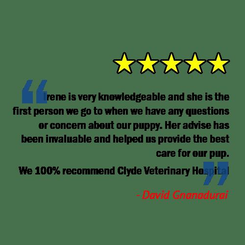 client review knowledgeable vet