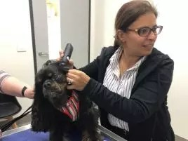 dr irene mitry veterinary surgeon