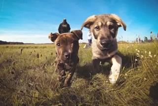 dogs animal behaviour puppy school