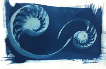 C_Nautilus