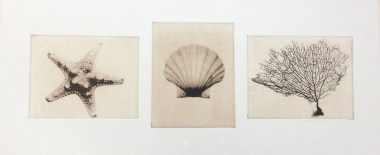 Gifts from the Sea_sepia