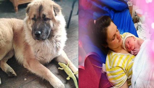 Carelessness!! Mum Leaves Newborn Child To Use The Toilet As Dog Claws Baby To Death