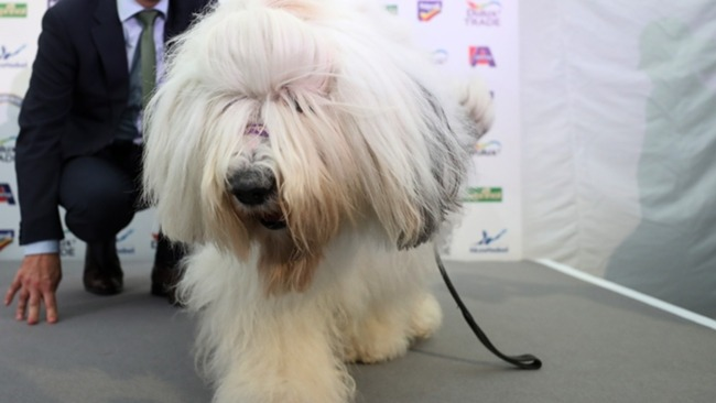 The Dulux dog had Tottenham fans wound up on Thursday