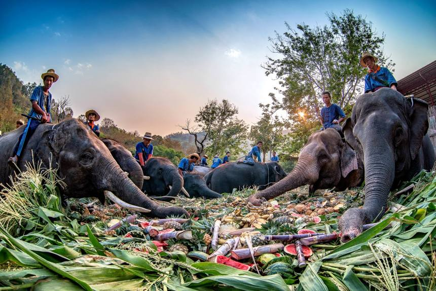 ThaiElephantDay2019ThaiElephantsThroughTheLensPhoto3