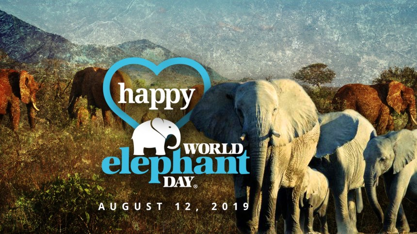 WorldElephantDay2019CoverFBWorldElephantDay