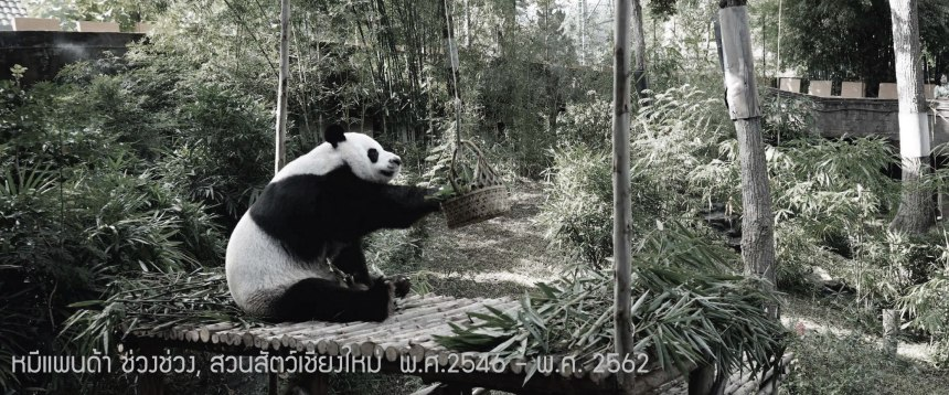 Chiang Mai Zoo - Cover FB