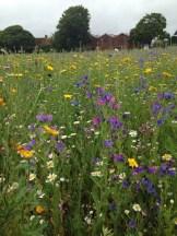 Sunday at the lavender farm
